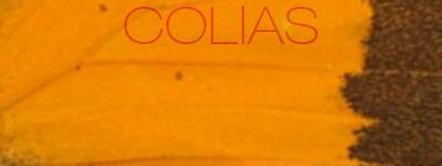 Colias